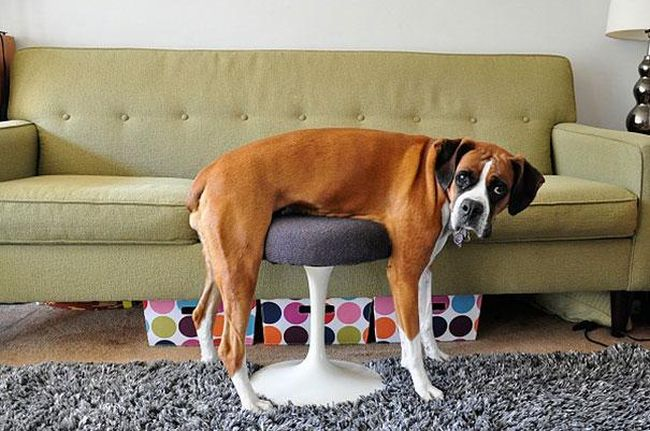 Furniture and Pets